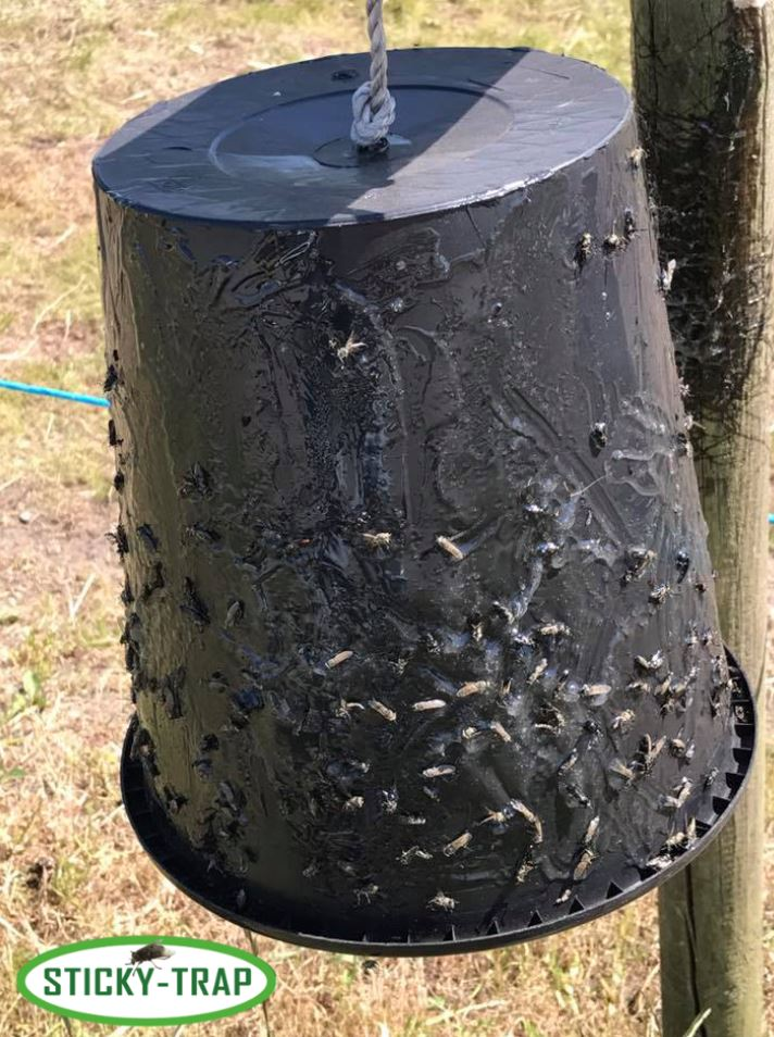 Sticky Trap bucket outdoors
